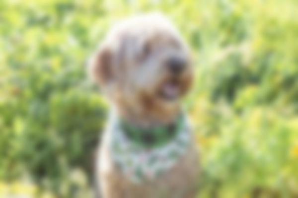 Reversible Dog Bandanas - Versatile Style