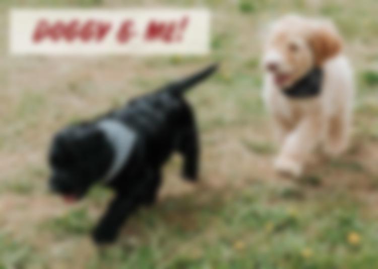 doggyandme2119.jpg