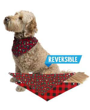 Don't Wake the Bear Plaid Dog Bandana