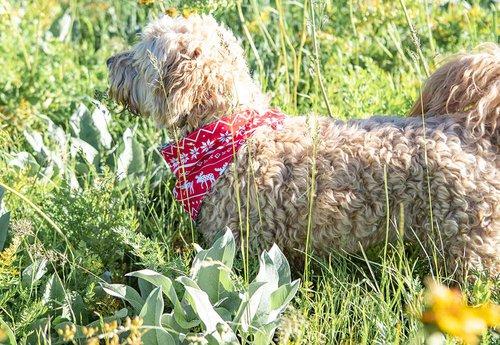 Reversible Bandana for Dogs