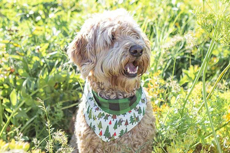Dog Bandana reversible